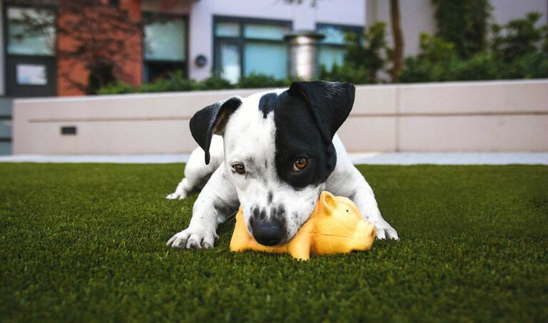 Best Dog Toys In Canada